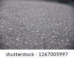 dew drops in selective focus | Shutterstock . vector #1267005997