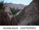 day trip in dahab  egypt | Shutterstock . vector #1267035601