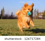 Stock photo playing fetch 126717284