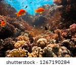 view of the surface of the... | Shutterstock . vector #1267190284
