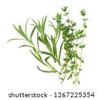 rosemary with thyme leaves... | Shutterstock . vector #1267225354