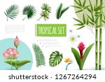 realistic tropical plants... | Shutterstock .eps vector #1267264294
