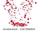 Stock photo rose petals fall to the floor isolated background on a blurred background of rose petals 1267286824