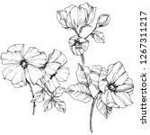 vector rosa canina. floral... | Shutterstock .eps vector #1267311217