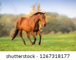 Stock photo horse in motion in autumn landscape 1267318177