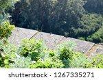 lizard head at national park... | Shutterstock . vector #1267335271