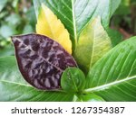 leaves   foliage and green... | Shutterstock . vector #1267354387