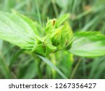 leaves   foliage and green... | Shutterstock . vector #1267356427