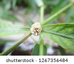 leaves   foliage and green... | Shutterstock . vector #1267356484