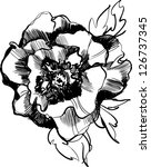 sketch of a beautiful blooming... | Shutterstock .eps vector #126737345