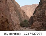 day trip in dahab  egypt | Shutterstock . vector #1267427074