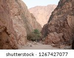 day trip in dahab  egypt | Shutterstock . vector #1267427077