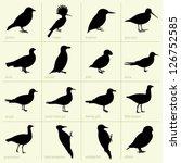 Birds  Part 2