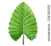 one big green tropical leaf  ... | Shutterstock . vector #126763331