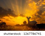 sihouette deer stands on the... | Shutterstock . vector #1267786741