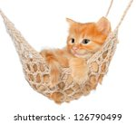 Stock photo cute red haired kitten in hammock on a white background 126790499