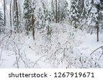 white snowy forest in winter... | Shutterstock . vector #1267919671