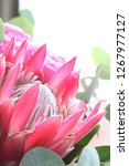 red protea flower in bouquet... | Shutterstock . vector #1267977127