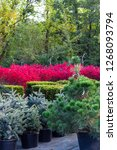 various bushes and trees sold... | Shutterstock . vector #1268093794