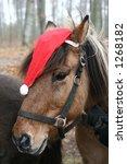 Icelandic  Horses With...