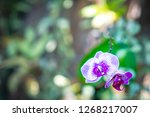 Nature Flower Concept Orchids Floral - Fine Art prints