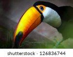 toco toucan  ramphastos toco  | Shutterstock . vector #126836744