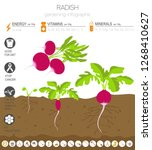 radish beneficial features... | Shutterstock .eps vector #1268410627