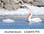 dalmatian pelican in winter | Shutterstock . vector #126845795