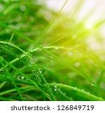 soft green grass background | Shutterstock . vector #126849719