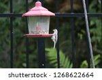 cute chickadee titmouse... | Shutterstock . vector #1268622664