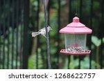 cute chickadee titmouse... | Shutterstock . vector #1268622757