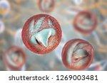 release of sporozoites from... | Shutterstock . vector #1269003481