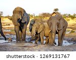 elephants at a watering hole at ...   Shutterstock . vector #1269131767