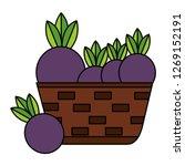 wicker basket with fresh beet   Shutterstock .eps vector #1269152191