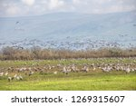 flock of  migrating common... | Shutterstock . vector #1269315607