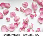 Stock photo flower texture for design can be used as a background wallpaper 1269363427