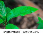 a colorful plant leaf | Shutterstock . vector #1269452347
