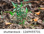 growing green plants | Shutterstock . vector #1269455731