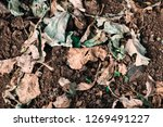 dry plant leaves | Shutterstock . vector #1269491227