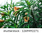 a green flowering colorful plant | Shutterstock . vector #1269492271