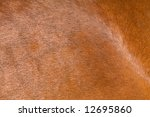 A Horse Fur Close Up