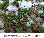 green grass mixed with yellow... | Shutterstock . vector #1269706351