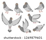Cartoon Pigeon. City Dove Bird...