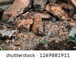 rough textured rocks | Shutterstock . vector #1269881911