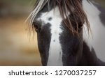 the look of this pony called... | Shutterstock . vector #1270037257