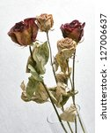 Dried Roses With Background...