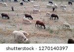 ruminant domestic mammalia.... | Shutterstock . vector #1270140397
