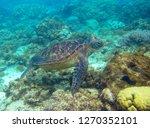 green turtle swimming...   Shutterstock . vector #1270352101