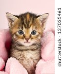 Stock photo small kitten wrapped in pink banket with pink background 127035461