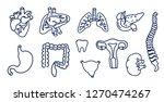 set of human internal organs... | Shutterstock .eps vector #1270474267